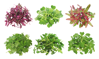 MicroGreen Assortment