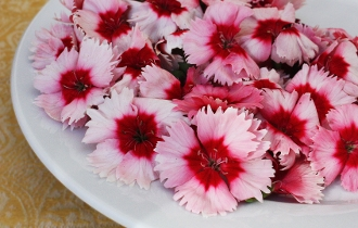 Flower Dianthus Assorted 50 Ct