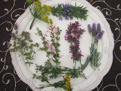 Flower Specialty Herb Flowers Mix