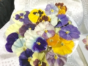 Crystallized Pansy 10 Count