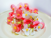 Flower Begonia Mix 50 Ct