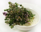 Flower Thyme Blossom 50 Ct