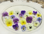 Flower Viola Pastels Mix 50 Ct