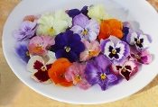 Flower Pansy Mix