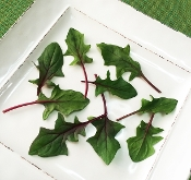 Petite Spinach Sweet Red™