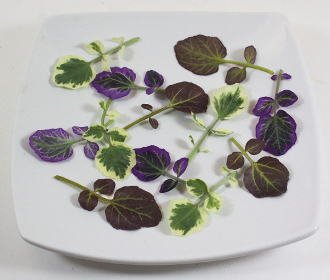 Petite Watercress Mix