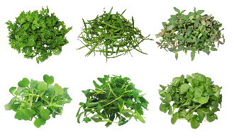 MicroGreen Herb Assortment