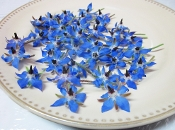 Flower Borage Blossom 100 Ct