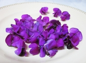 Flower Bean Purple 50 Ct