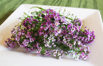 Flower Alyssum Purple 50 Ct