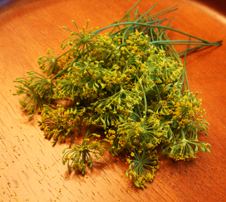 Flower Dill Blossom 50 Ct