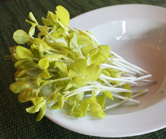Golden Fava Shoots 4 oz
