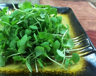 Micro Basil Lemon