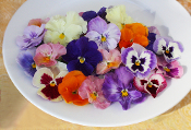 Flower Pansy Mix 50 ct