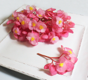 Edible flowers flower begonia pink 50 ct mightylinksfo