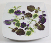 Petite Watercress Mix 100ct