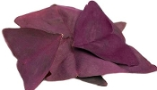 Sorrel Butterfly Purple